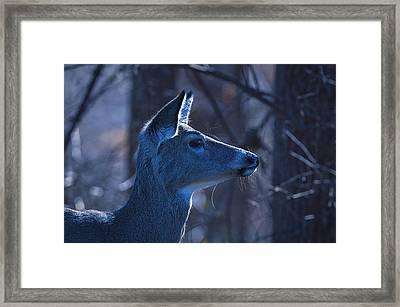 After Midnight - Deer Framed Print by SharaLee Art