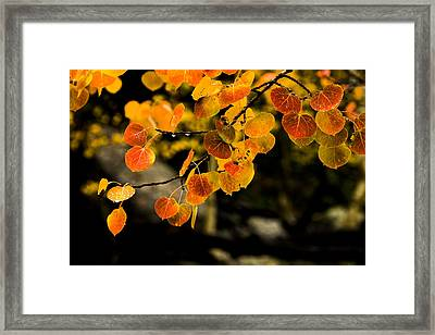 After Rain Framed Print by Chad Dutson