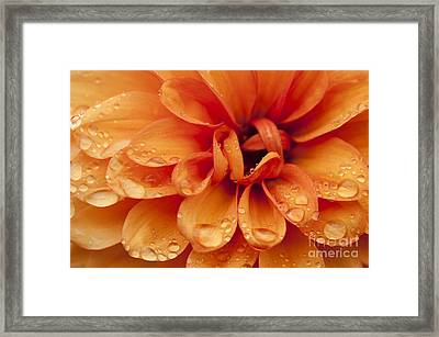 After The Rain Framed Print by Anne Gilbert