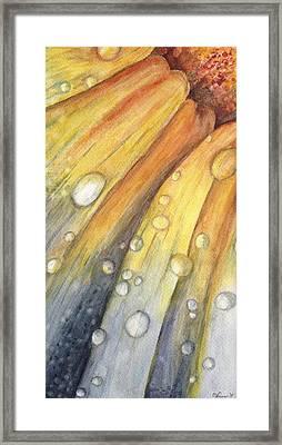 After The Rain Framed Print by Carol Warner