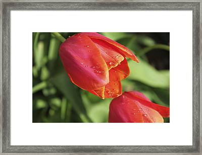 After The Rain Framed Print by Laura Watts