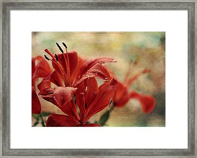 After The Rain Framed Print by Maria Angelica Maira