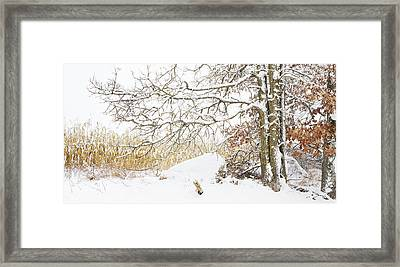 After The Snow Storm Framed Print by Barbara Smith