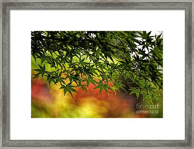Afternoon Glow Framed Print by Peggy Hughes
