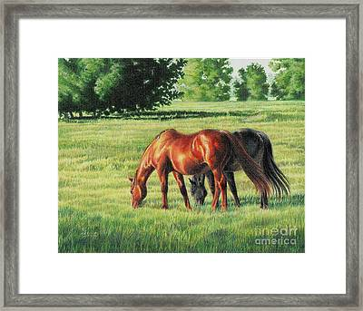 Afternoon Graze Framed Print by Carrie L Lewis