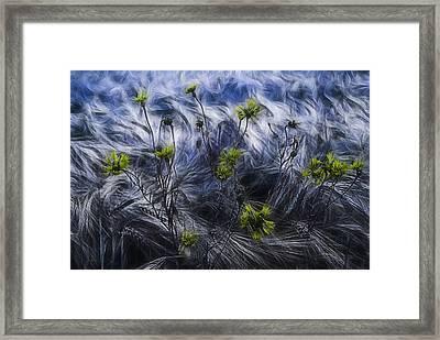 Against The Wind Framed Print by Joachim G Pinkawa