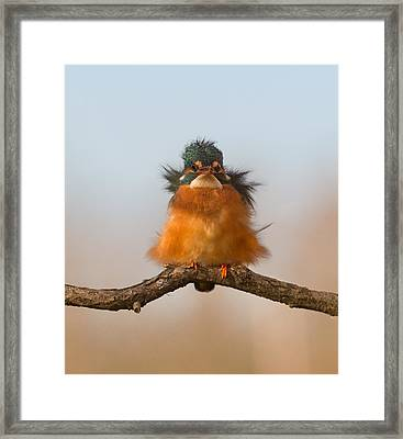 Against Wind Framed Print by Cheng Chang