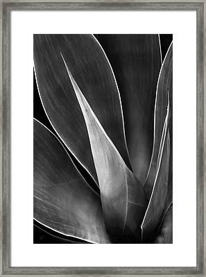 Agave No 3 Framed Print by Ben and Raisa Gertsberg