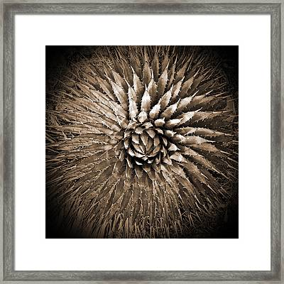 Agave Spikes Sepia Framed Print by Alan Socolik