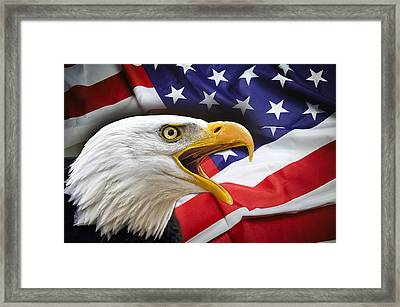 Aggressive Eagle And United States Flag Framed Print by Daniel Hagerman