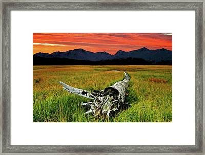 Aging Beautifully Framed Print by Ron Day