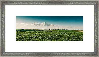 Agriculture Field And Perfect Sky Framed Print by Daniel Barbalata