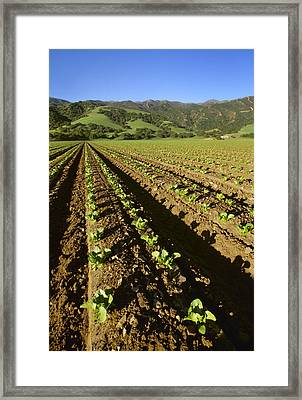Agriculture - Field Of Early Growth Framed Print by Ed Young