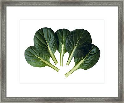 Agriculture - Tat-soi Leaves Closeup Framed Print by Ed Young