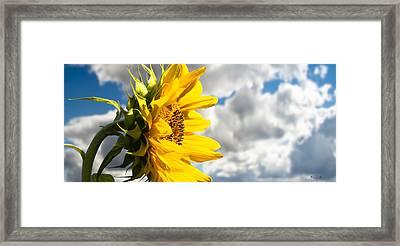 Ah Sunflower Framed Print by Bob Orsillo