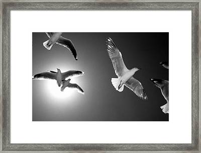 Airborne Framed Print by Sean Davey
