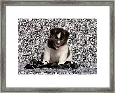 Akita Puppy Sitting In Black And White Framed Print by Zandria Muench Beraldo