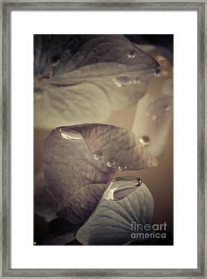 Alapaap Framed Print by Bobby Villapando