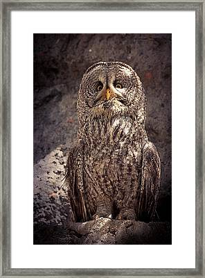 Alberta Great Gray Owl  Framed Print by Maria Angelica Maira