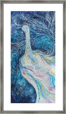 Albino Peacock Framed Print by Christy  Freeman