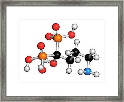 Alendronic Acid Osteoporosis Drug Framed Print by Molekuul