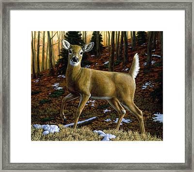 Whitetail Deer - Alerted Framed Print by Crista Forest