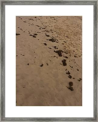 Algae Trail In The Sand Framed Print by Sandra Pena de Ortiz