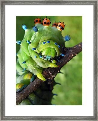 Alien Nature Cecropia Caterpillar Framed Print by Christina Rollo