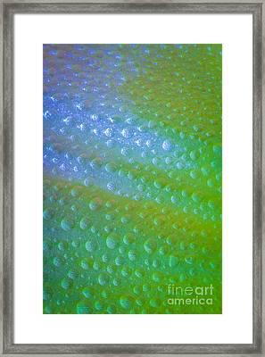 Alien Skin Framed Print by Mitch Shindelbower