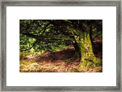 Alive Memory Of Thetrees. Glendalough. Ireland Framed Print by Jenny Rainbow