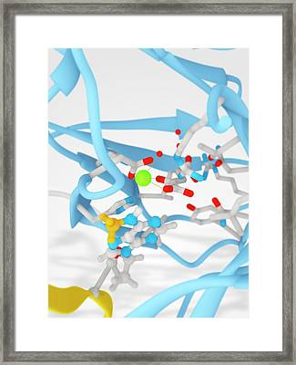 Alkb Protein Active Site Framed Print by Ramon Andrade 3dciencia
