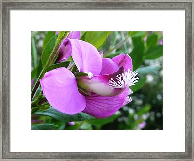 All At Sea  Framed Print by Steve Taylor