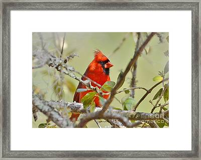 All Dressed In Red Framed Print by Kathy Baccari