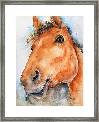 All Ears_ Horse Portrait Framed Print by Arti Chauhan