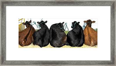All Eyes Front Framed Print by Will Borden