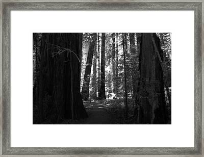 All Is Quiet Framed Print by Laurie Search