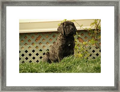 All Right Who Has My Chew Toy Framed Print by Jeff Swan