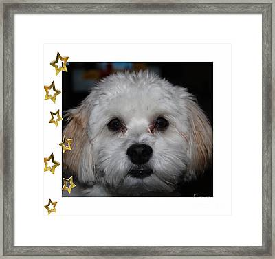 All Star Yoshi Framed Print by Barbara Griffin