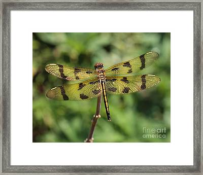 All That Glitters Is Gold Framed Print by Kenny Glotfelty