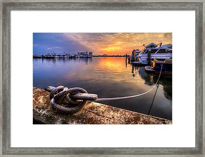All Tied Up Framed Print by Debra and Dave Vanderlaan