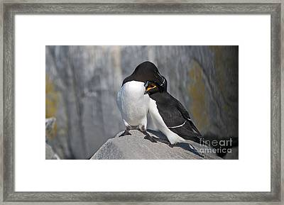All You Need Is Love... Framed Print by Nina Stavlund
