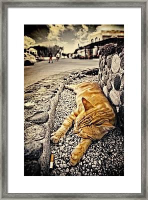Alley Cat Siesta In Grunge Framed Print by Meirion Matthias