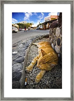 Alley Cat Siesta Framed Print by Meirion Matthias