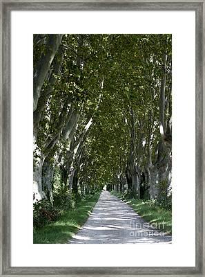 Alley Of Plane Trees. Provence. France Framed Print by Bernard Jaubert