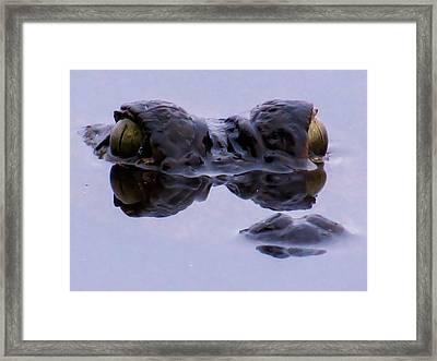 Alligator Eyes On The Foggy Lake Framed Print by Zina Stromberg