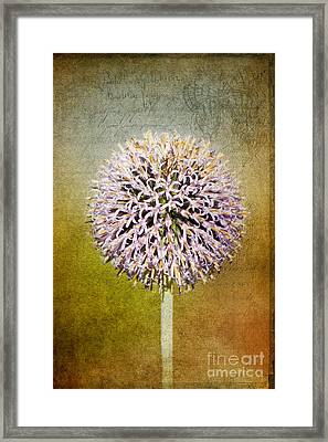 Allium Flower Framed Print by Angela Doelling AD DESIGN Photo and PhotoArt