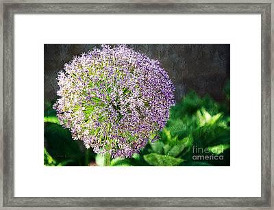 Allium Hollandicum Purple Sensation Painterly Framed Print by Andee Design