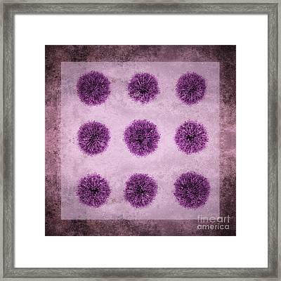 Allium Hollandicum Purple Sensation Pattern Framed Print by Tim Gainey