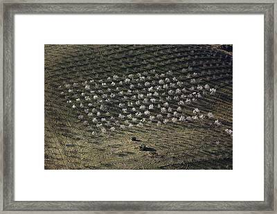 Almond Blossom, Chirivel Framed Print by Steve Brockett