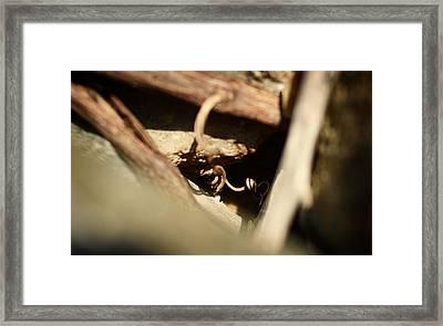 Almost Golden Framed Print by Rebecca Sherman